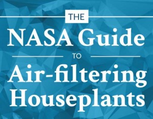 NASA Guide to Air Filtering Houseplant