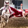 One of the larger fall fairs in Ontario - The Markham Fall Fair
