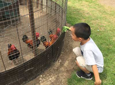 Lionel's farm - boy and chickens