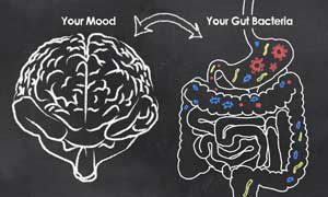 "Your ""gut brain"" in your aging body"