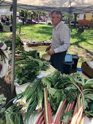 Farmer's market for seniors - fresh rhubarb
