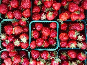 Farmer's market for seniors - strawberries
